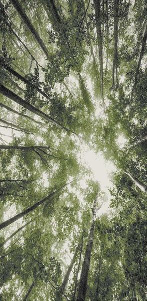 Merinos Belis Halı Ağaç Desenli | Yeşil | 22103-40-Green